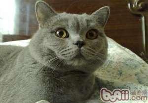 a_如何与猫咪的关系变得亲密 -成猫饲养[新闻]